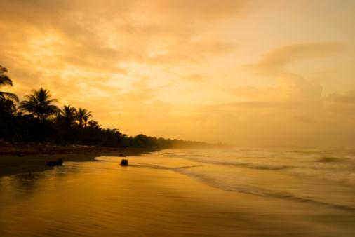 Palm tree「熱帯の日没」:スマホ壁紙(15)