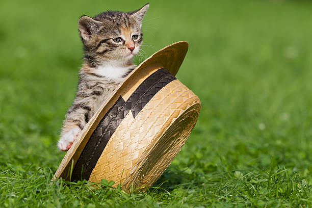 Germany, Kitten sitting in hat, close up:スマホ壁紙(壁紙.com)