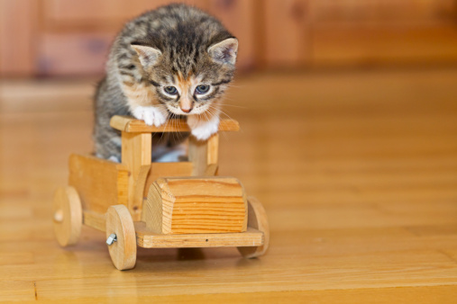 Kitten「Germany, Kitten sitting on wooden toy, close up」:スマホ壁紙(2)