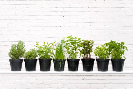 Spice「Herbs」:スマホ壁紙(16)