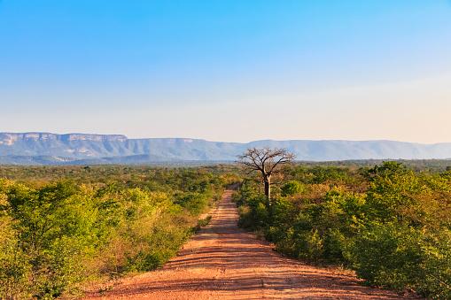 アフリカ「Southern Africa, Zimbabwe, dirt track through landscape」:スマホ壁紙(11)