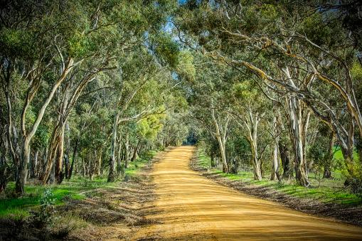 Dirt Road「Bush Road」:スマホ壁紙(7)