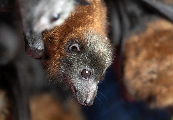 Animal「The Survivors: Saving Australian Wildlife Following Fires And Drought」:写真・画像(5)[壁紙.com]