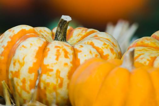 Pumpkin「Pumpkins and other fall crops - III」:スマホ壁紙(10)