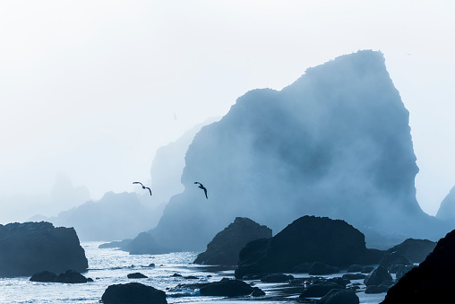Ecola State Park「Sea stacks are silhouetted against fog at Ecola State Park」:スマホ壁紙(18)