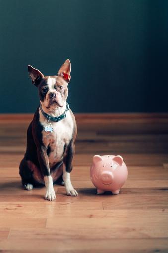 Investment「dog guarding piggy bank」:スマホ壁紙(12)