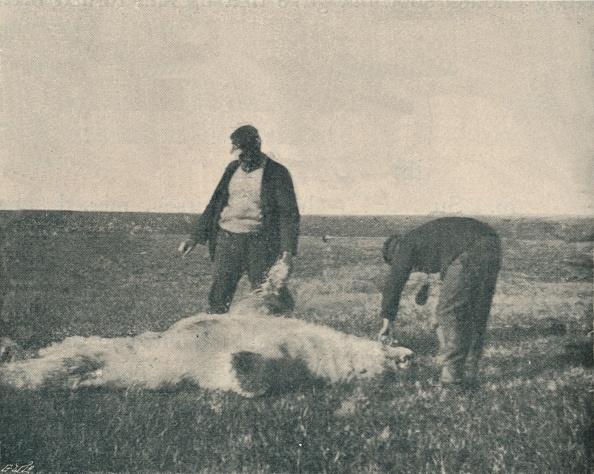 St「'A Dead Bear on Reindeer Island」:写真・画像(13)[壁紙.com]