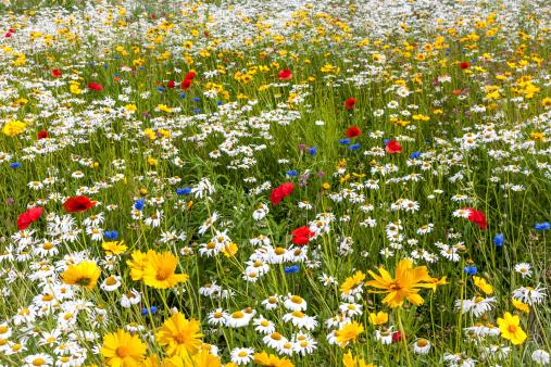 花畑「のさまざまなマルチカラーの野生の花々」:スマホ壁紙(7)