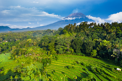 Mt Agung「Bali, aerial view of rice Terraces and Agung volcano in sunrise.」:スマホ壁紙(13)