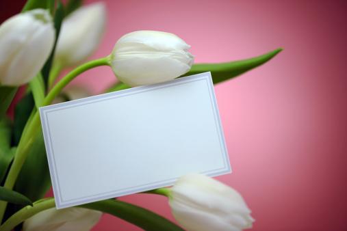 チューリップ「ホワイトにピンクのチューリップと、空のカード」:スマホ壁紙(17)