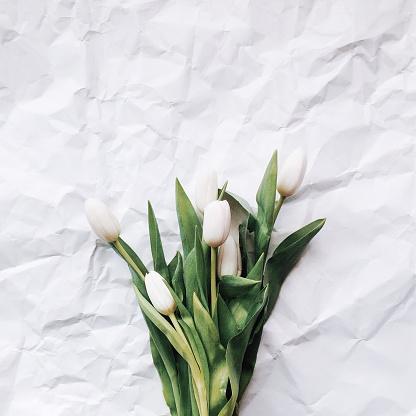 チューリップ「White tulips on a white background」:スマホ壁紙(13)