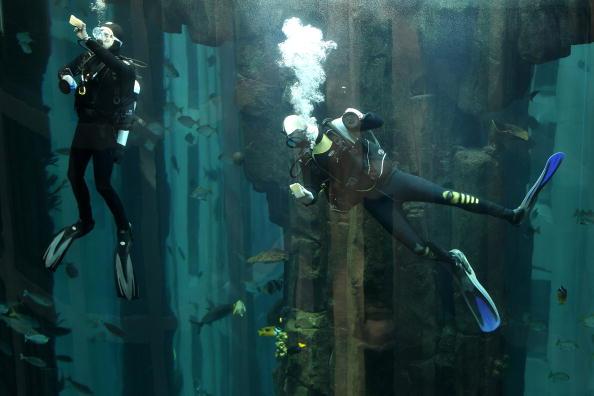 25 Meter「Divers Clean AquaDom Aquarium」:写真・画像(15)[壁紙.com]