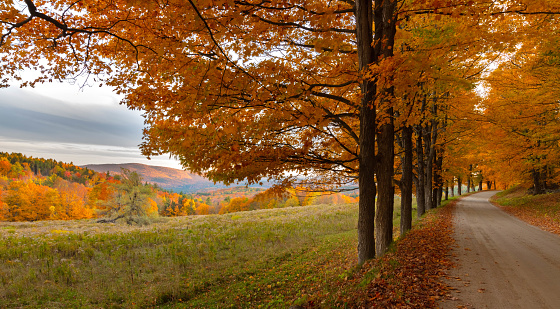 Dirt Road「New England Autumn Field along Maple Tree Lined Country Road in Vermont」:スマホ壁紙(4)