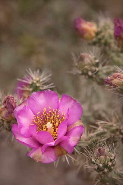 Cactus Bloom:スマホ壁紙(壁紙.com)