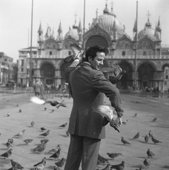 Archivio Cameraphoto Epoche「And The Pigeons」:写真・画像(11)[壁紙.com]