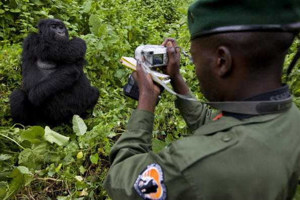 Gorilla「The Rangers of Virunga National Park」:写真・画像(6)[壁紙.com]