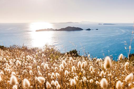 Corfu「Greece, Corfu, Afionas, grasses at the coast」:スマホ壁紙(13)