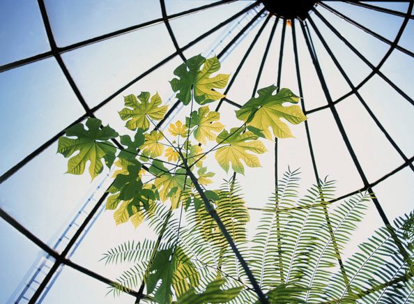 Architectural Dome「Tropical Plants in Botanical Garden, City of Zurich, Switzerland」:写真・画像(12)[壁紙.com]