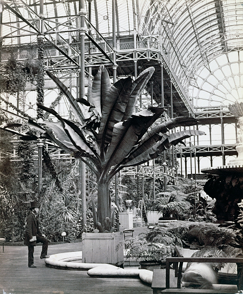 Tropical Tree「Tropical Plants In The Egyptian Room Crystal Palace Sydenham London 1854」:写真・画像(17)[壁紙.com]