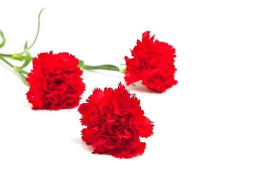 カーネーション「3 赤 carnations」:スマホ壁紙(3)