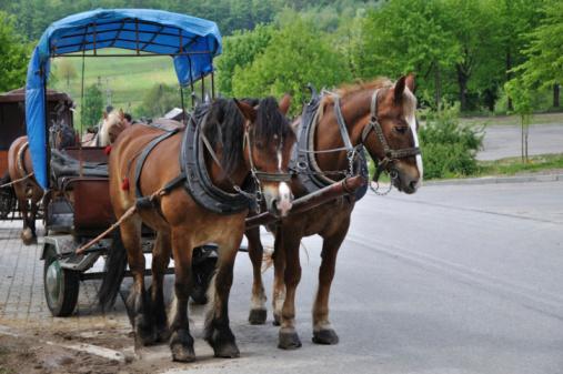 Horse-drawn carriage「四輪馬車」:スマホ壁紙(19)