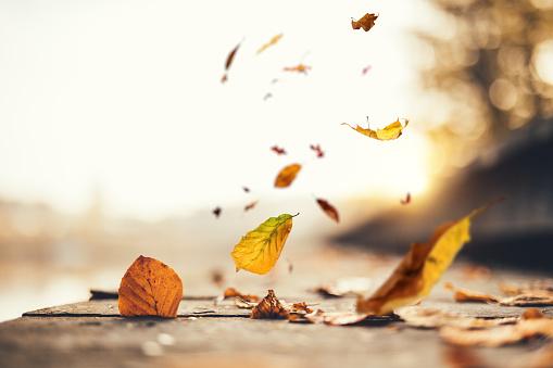 秋「のどかな秋のシーン」:スマホ壁紙(3)
