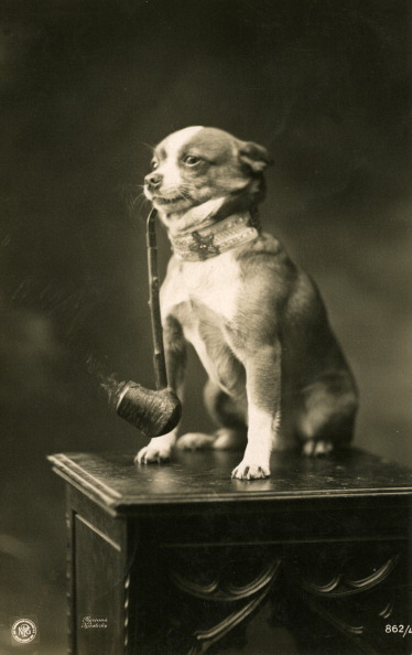 One Animal「Chihuahua Smoking A Pipe」:写真・画像(9)[壁紙.com]