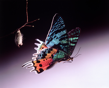 Spirituality「Metamorphosis of a Butterfly」:スマホ壁紙(11)