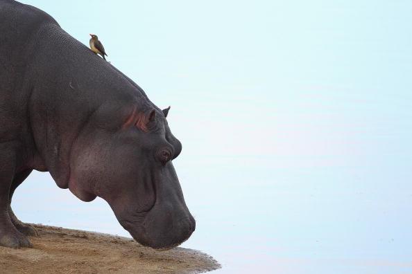 Wilderness Area「An African Safari」:写真・画像(2)[壁紙.com]