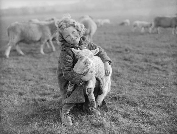 Animal「Little Lamb」:写真・画像(19)[壁紙.com]