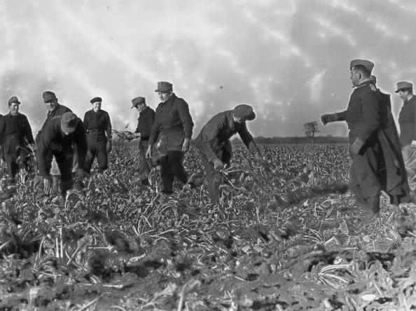 Harvesting「POW Labour」:写真・画像(15)[壁紙.com]