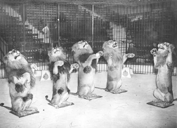 Hagenbeck's Cats:ニュース(壁紙.com)
