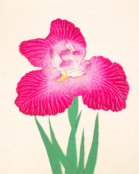 Petal「Kyo-Kanoko」:写真・画像(4)[壁紙.com]