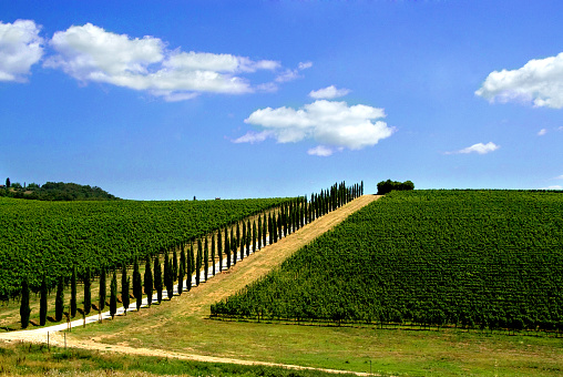 Avenue「Avenue lined with cypress trees by a Tuscan vineyard, Italy」:スマホ壁紙(5)