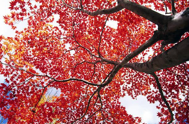 Autumnal trees:スマホ壁紙(壁紙.com)