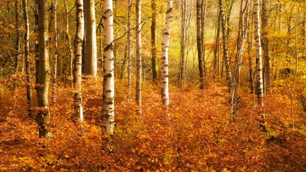 Autumnal trees in the Lake District, Cumbria, United Kingdom:スマホ壁紙(壁紙.com)