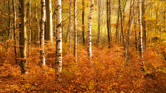 秋「Autumnal trees in the Lake District, Cumbria, United Kingdom」:スマホ壁紙(10)