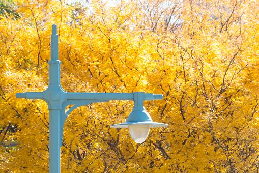 Hudson River Park「Autumnal tree leaves surround Streetlight」:スマホ壁紙(19)