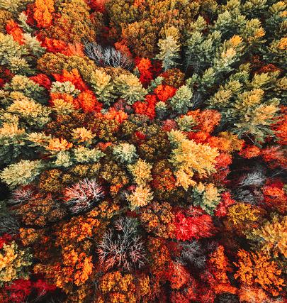 秋「秋の木の空中写真」:スマホ壁紙(8)