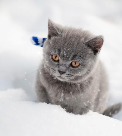 子猫「キトンの雪」:スマホ壁紙(15)