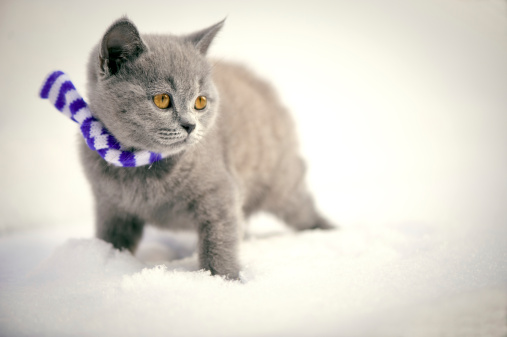 Kitten「キトンの雪」:スマホ壁紙(8)