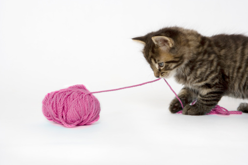 Kitten「A young tabby kitten playing with a ball of wool.」:スマホ壁紙(12)