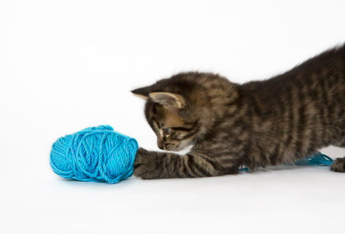 Kitten「A young Tabby kitten playing with wool.」:スマホ壁紙(10)