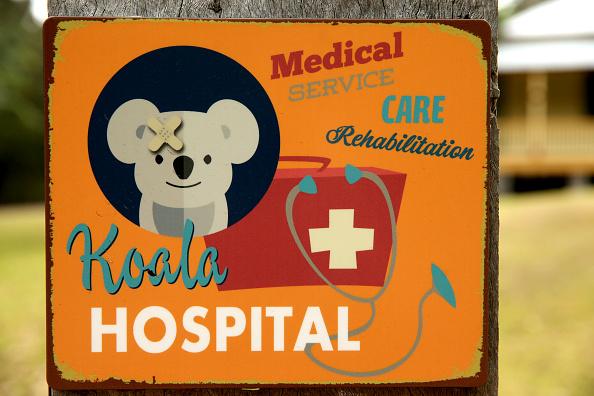 Port Macquarie「Koala Hospital Works To Save Injured Animals Following Bushfires Across Eastern Australia」:写真・画像(11)[壁紙.com]