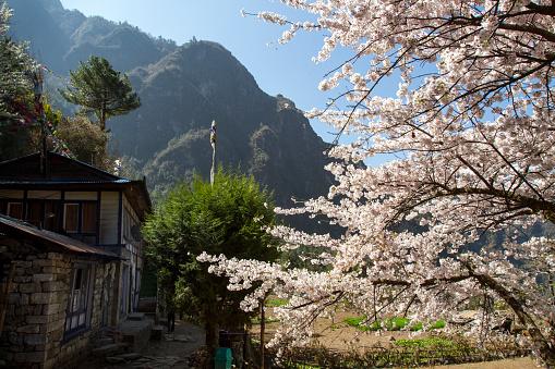 Khumbu「Mountain Village on Mount Everest Trek」:スマホ壁紙(5)