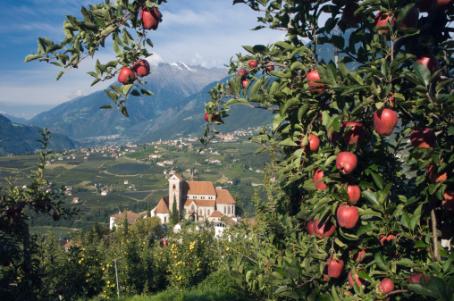 Apple Tree「Mountain village, Apple Tree, Schenna, South Tyrol」:スマホ壁紙(10)