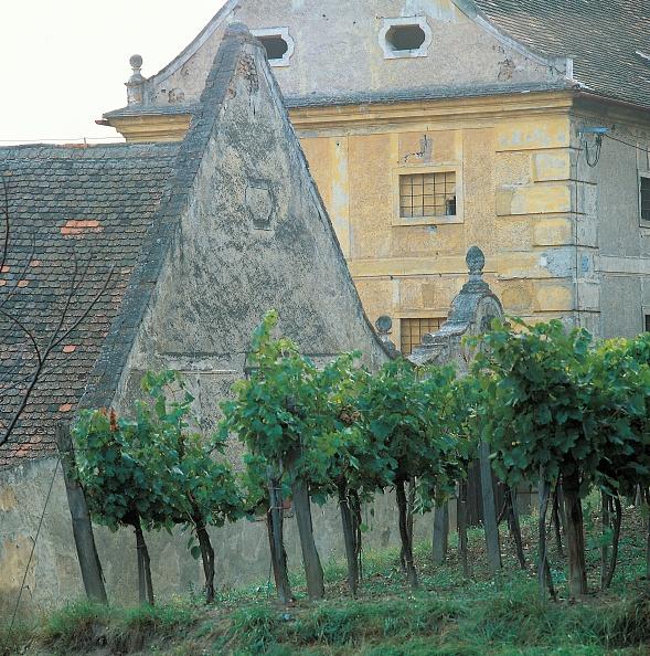 Agricultural Building「Vineyards in Pulkau」:写真・画像(0)[壁紙.com]