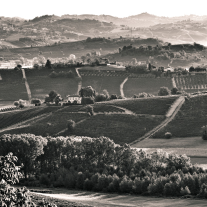 Sepia Toned「Vineyards in Italy」:スマホ壁紙(2)