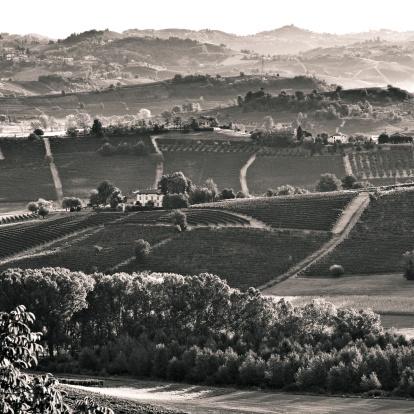 Piedmont - Italy「Vineyards in Italy」:スマホ壁紙(3)