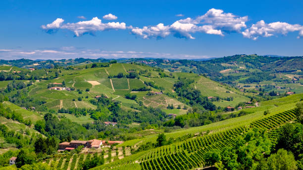 Vineyards in the Langhe, a hilly area mostly based on vine cultivation and well known for the production of Barolo wine. Piedmont, Italy:スマホ壁紙(壁紙.com)